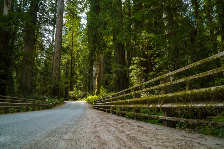 Redwoods Northern California Small-1-2