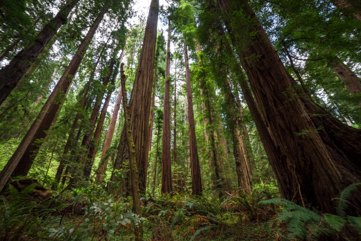 Redwoods Northern California Small-10