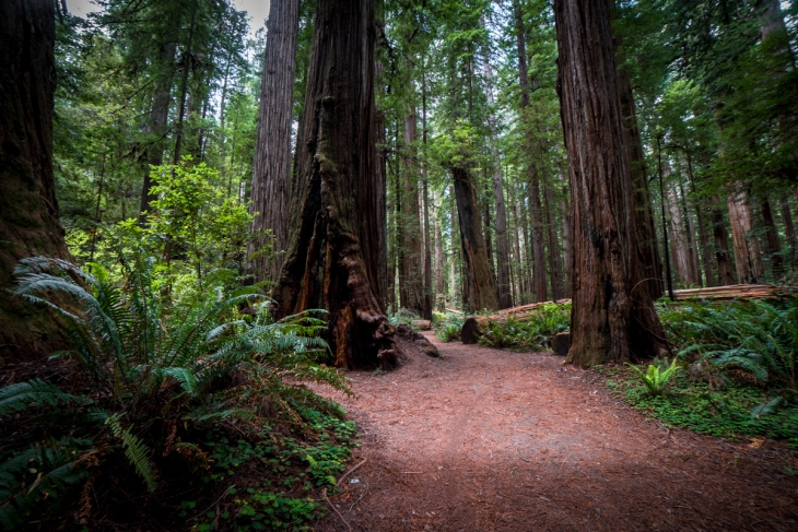 Redwoods Northern California Small-12