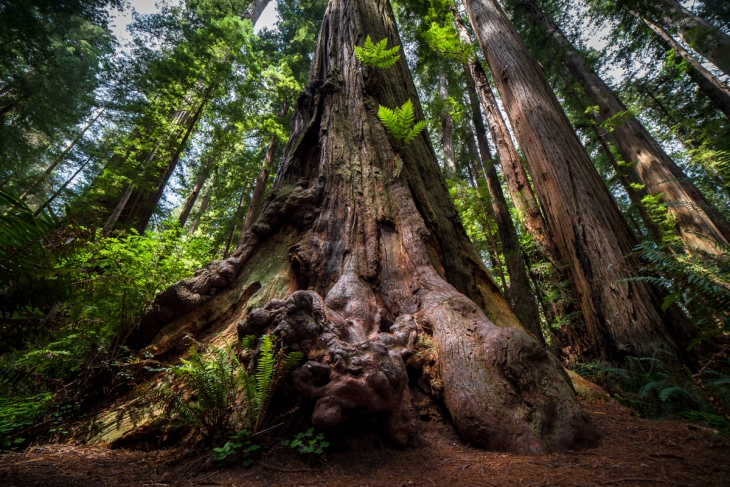 Redwoods Northern California Small-13