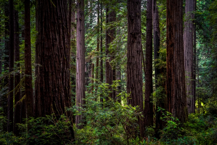 Redwoods Northern California Small-17