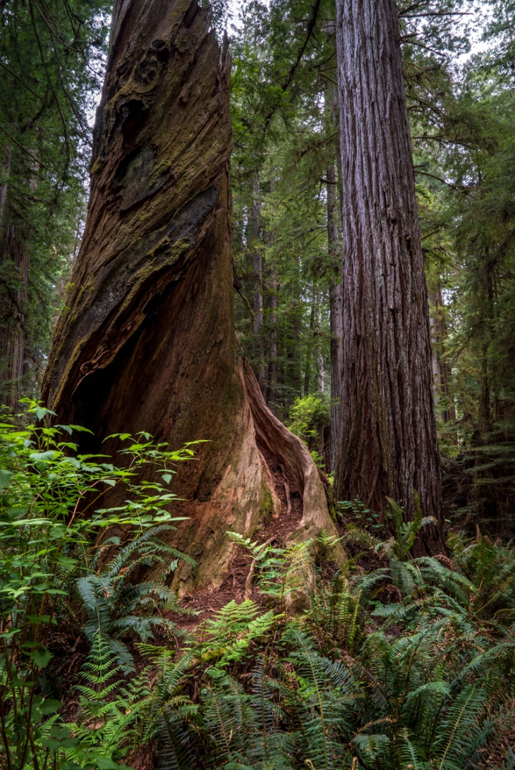 Redwoods Northern California Small-18