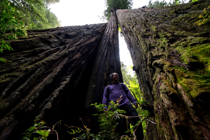 Redwoods Northern California Small-19