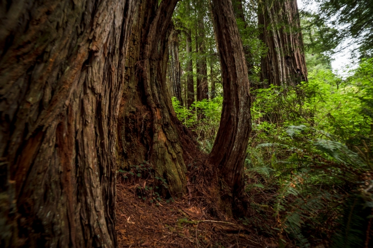 Redwoods Northern California Small-21