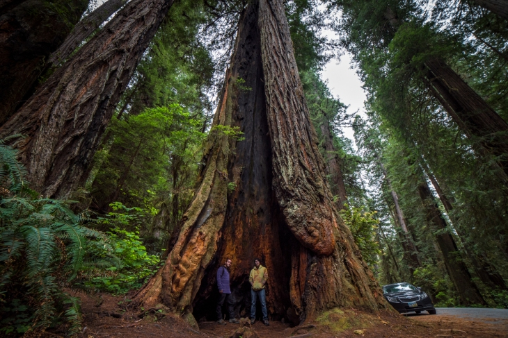Redwoods Northern California Small-25