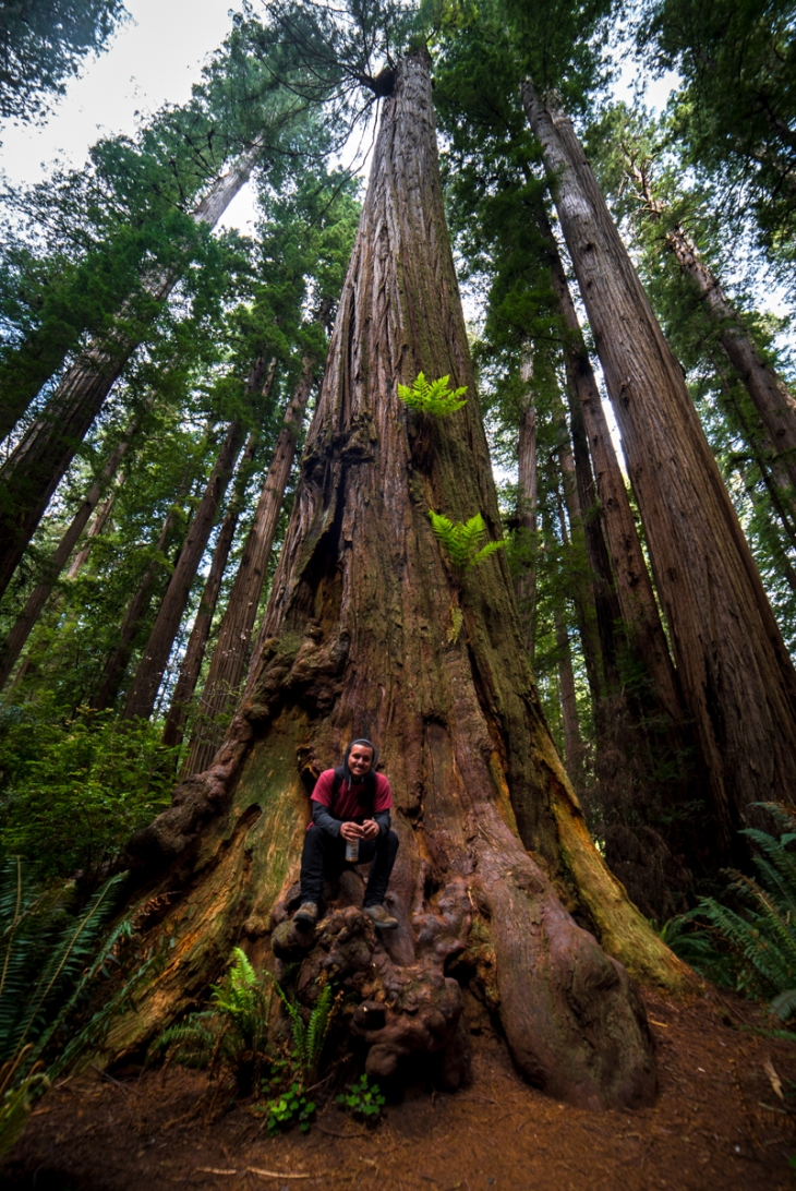 Redwoods Northern California Small-3