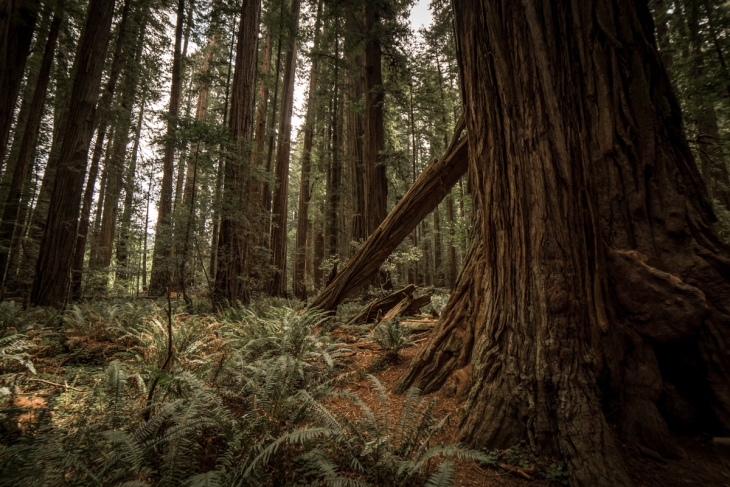 Redwoods Northern California Small-4