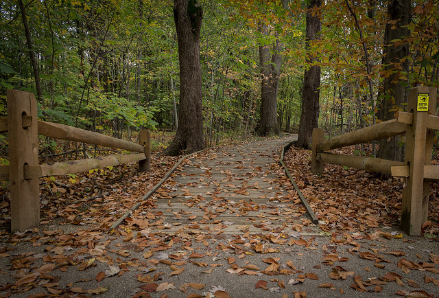 Hogback Ridge: Take A Stroll On A Scenic Boardwalk Into Nature