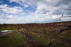 Virant winter vineyards