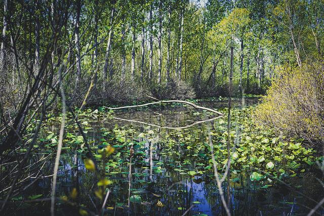 Eyring Wetlands Metropark